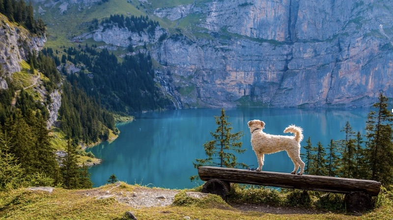 Essential Tips for Traveling with a Dog Safely